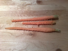 inner carrot.jpg