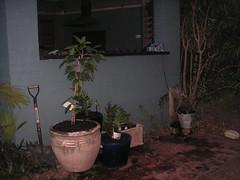 Herb and kitchen garden