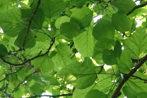 Tree - The Original Photo