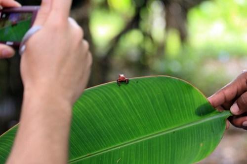 Costa Rica - Día 3 (222)