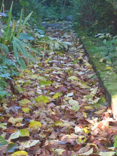 Dead leaves in my parents' garden