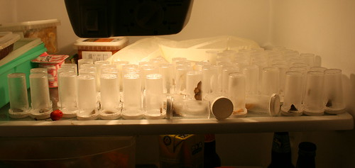 Moth jars in fridge