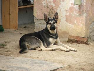 DSCF6017 barát de hond