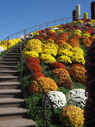 stairway to mums