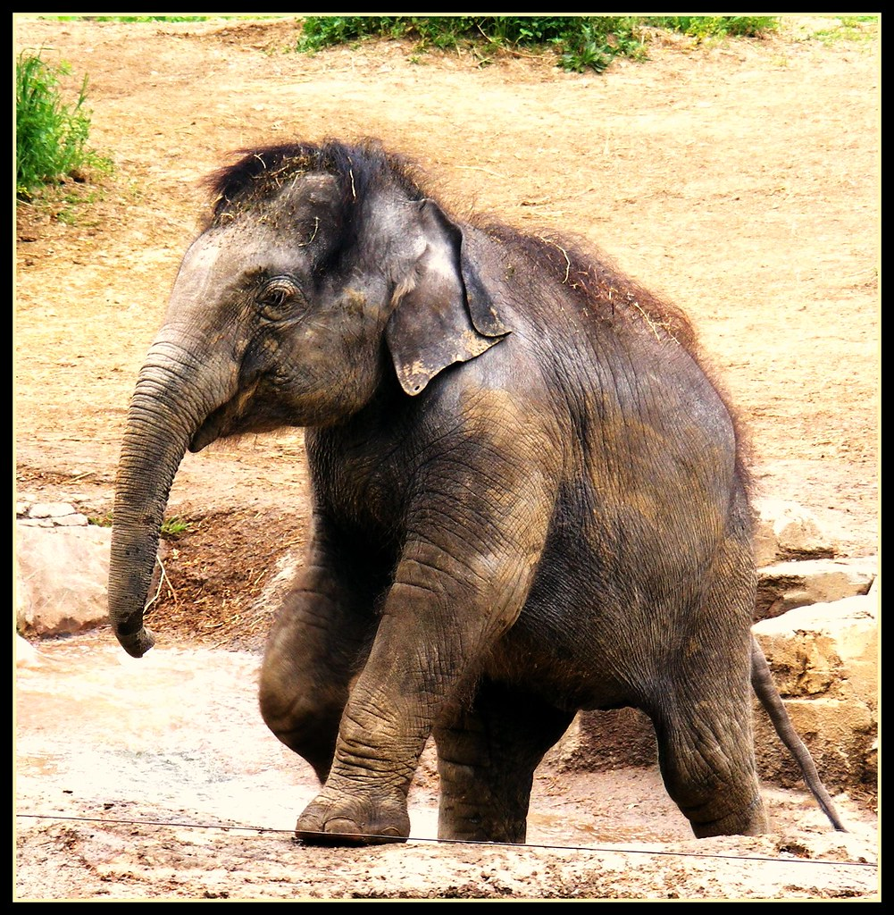 Jade the Elephant
