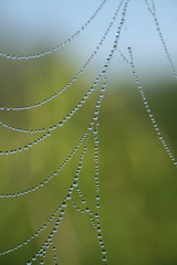 Spider Web or Fairy Jewelry