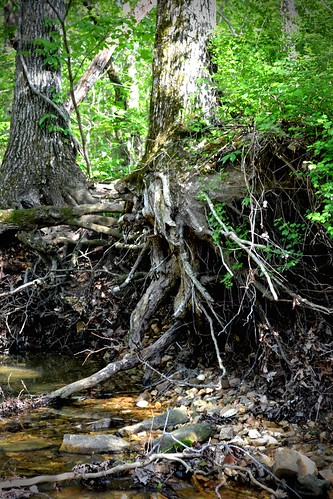 more evil tree roots