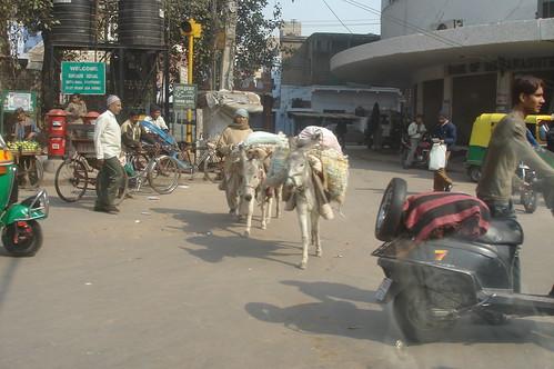 往Old Delhi1-13驢�搬運