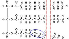 Glycerol on the left with three fatty acids. Note the kink in one fatty acid.