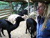 alpaca in the nursery on Vimeo