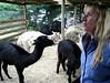 alpaca in the nursery on Vimeo