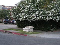 Couch and flowering tree