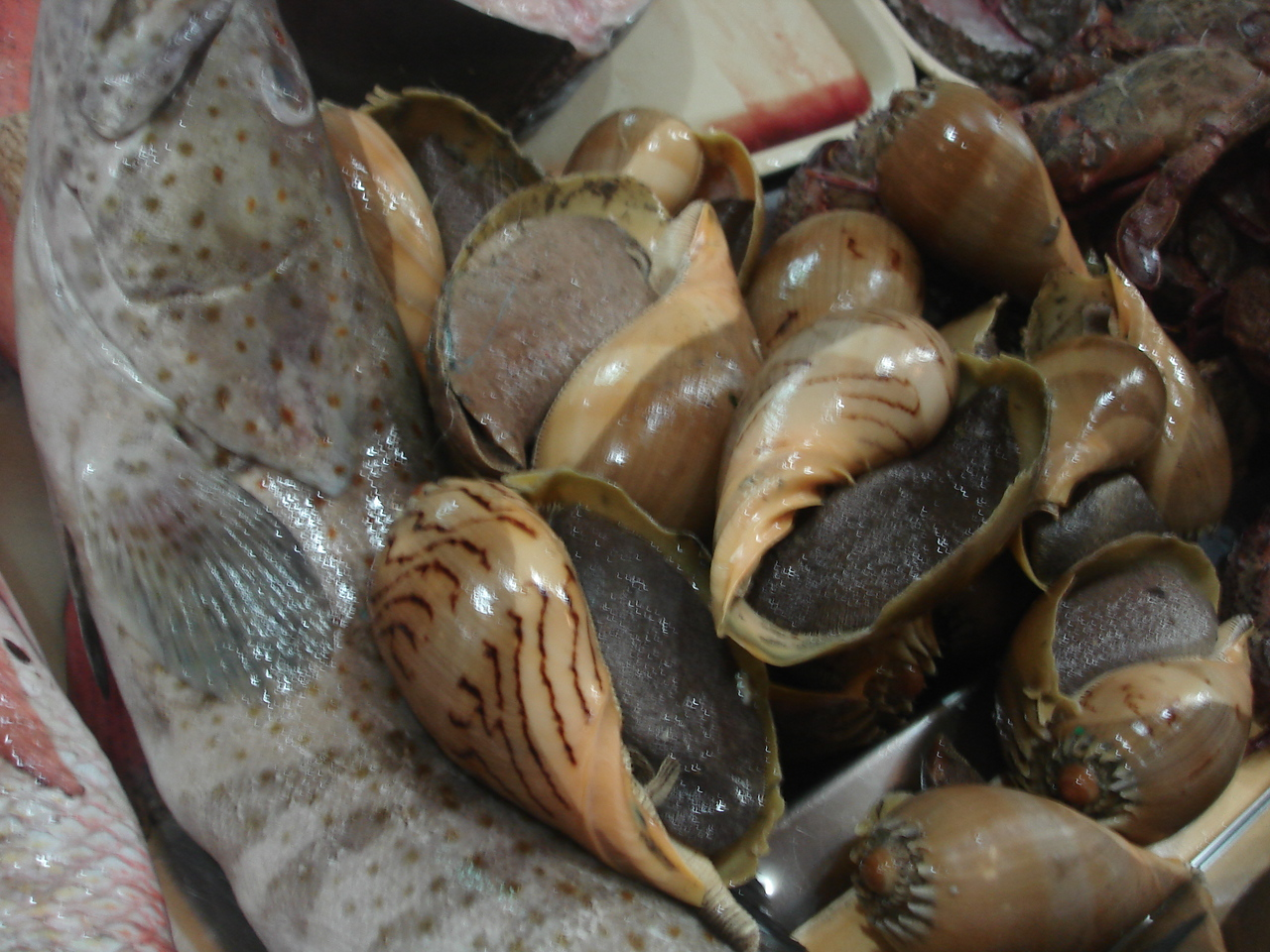The waiters call these shellfish Dila-dila or tongue shells because they look like huge black tongues.