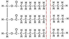 glycerol on the left with three fatty acids