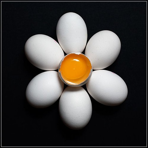 "egg flower • <a style=""font-size:0.8em;"" href=""http://www.flickr.com/photos/15708151@N05/2574154722/"" target=""_blank"">View on Flickr</a>"