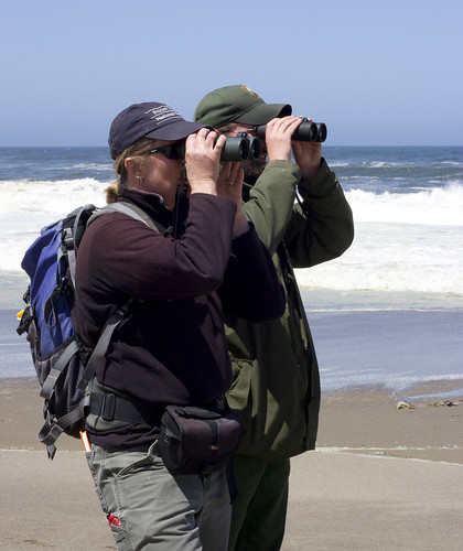 Plover Monitoring