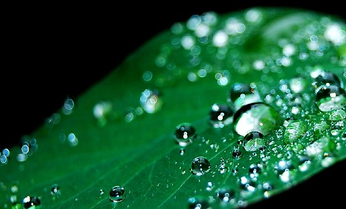 Shimmer & Drops