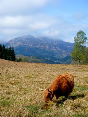 Scenic Scotland