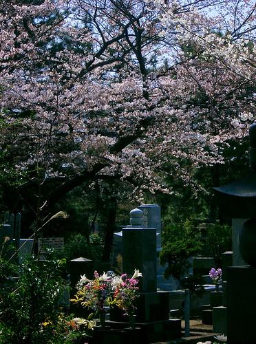 Aoyama Reien.
