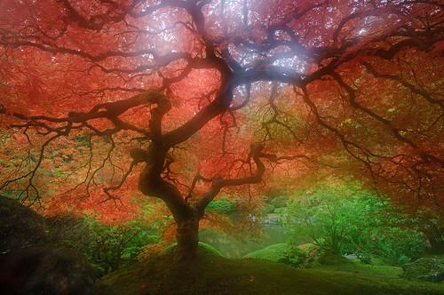 Japenese Garden - Portland by rasone.