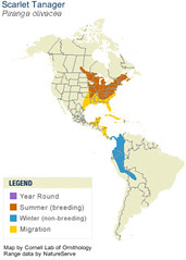 Scarlet Tanager Range Map from Cornell