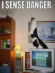 funny_cats_a_013