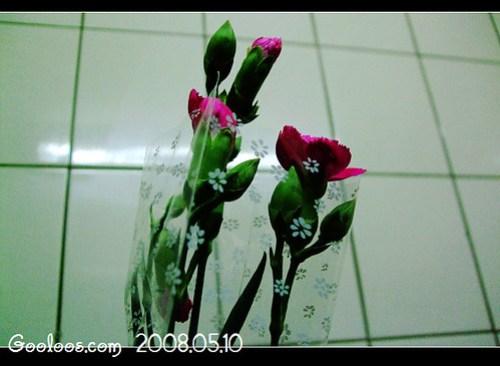 2008母親節