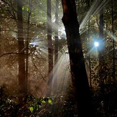 Natural Night Light Beams