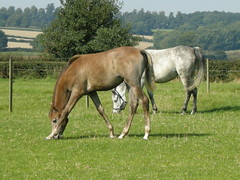 Horses in Hertfordshire