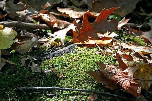 Leaves, Moss, & Light