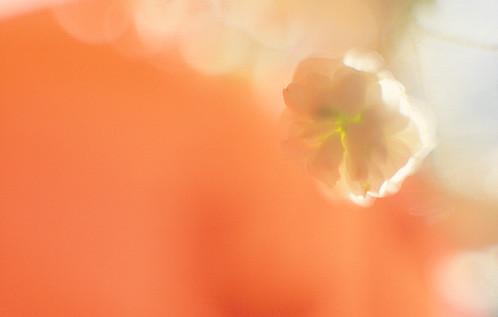 Flower por Bahman Farzad
