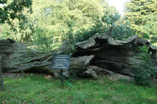 Queen Elizabeth I oak