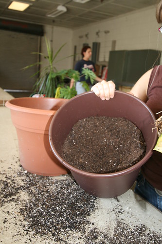 Create a base layer of soil