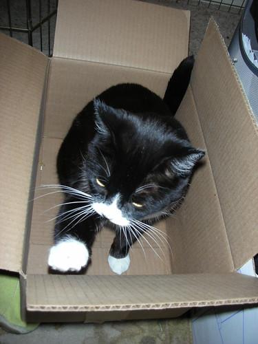 Testing the box