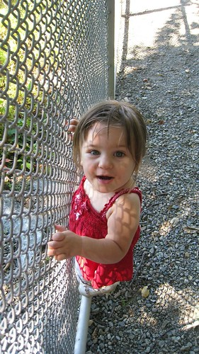 Amelia *trying* to climb the fence