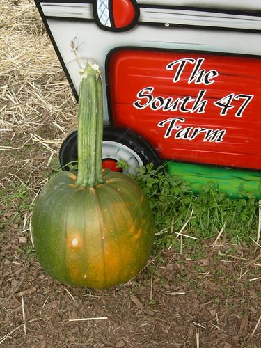 Tall stem green pumpkin
