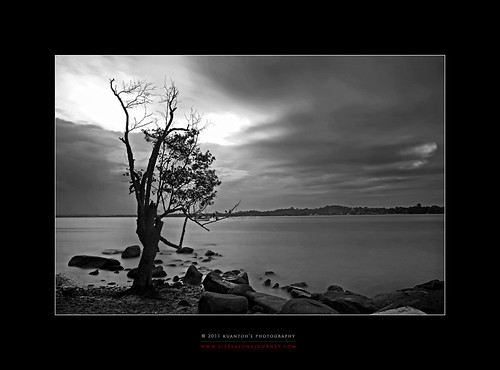 Archives_2005_to_Present #162 - Last Changi Beach Lone Tree by kuantoh