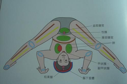 半倒立與全倒立_雙腿張開伸展式