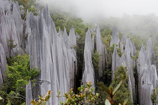 The Pinnacles in Mulu National Park