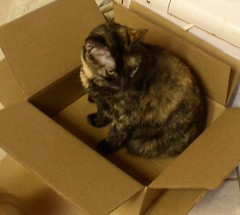 Chloe in the Box
