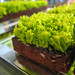 Grass brownie for S1