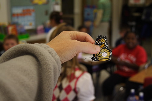 Tagged Monarch in Classroom