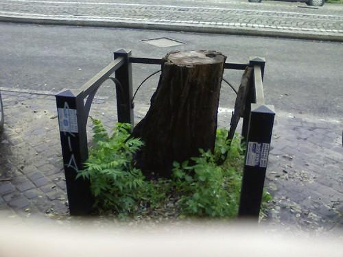Via di Porta Maggiore di fronte alla vetrina dellautosalone Fiat