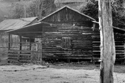 Old Wood—in b&w
