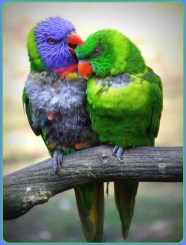 lovebirds by patries71.