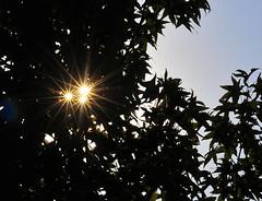 105mm sunstar