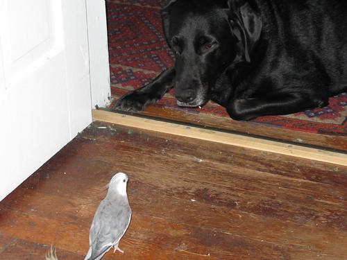 Conversation between bird and dog