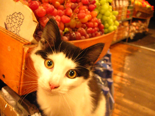 Fruit Kitten