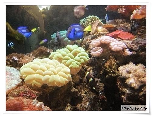 海洋深層水魚缸