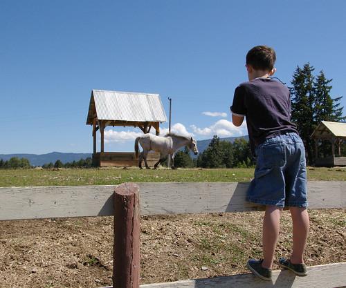 Magnus callling a horse with his ocarina